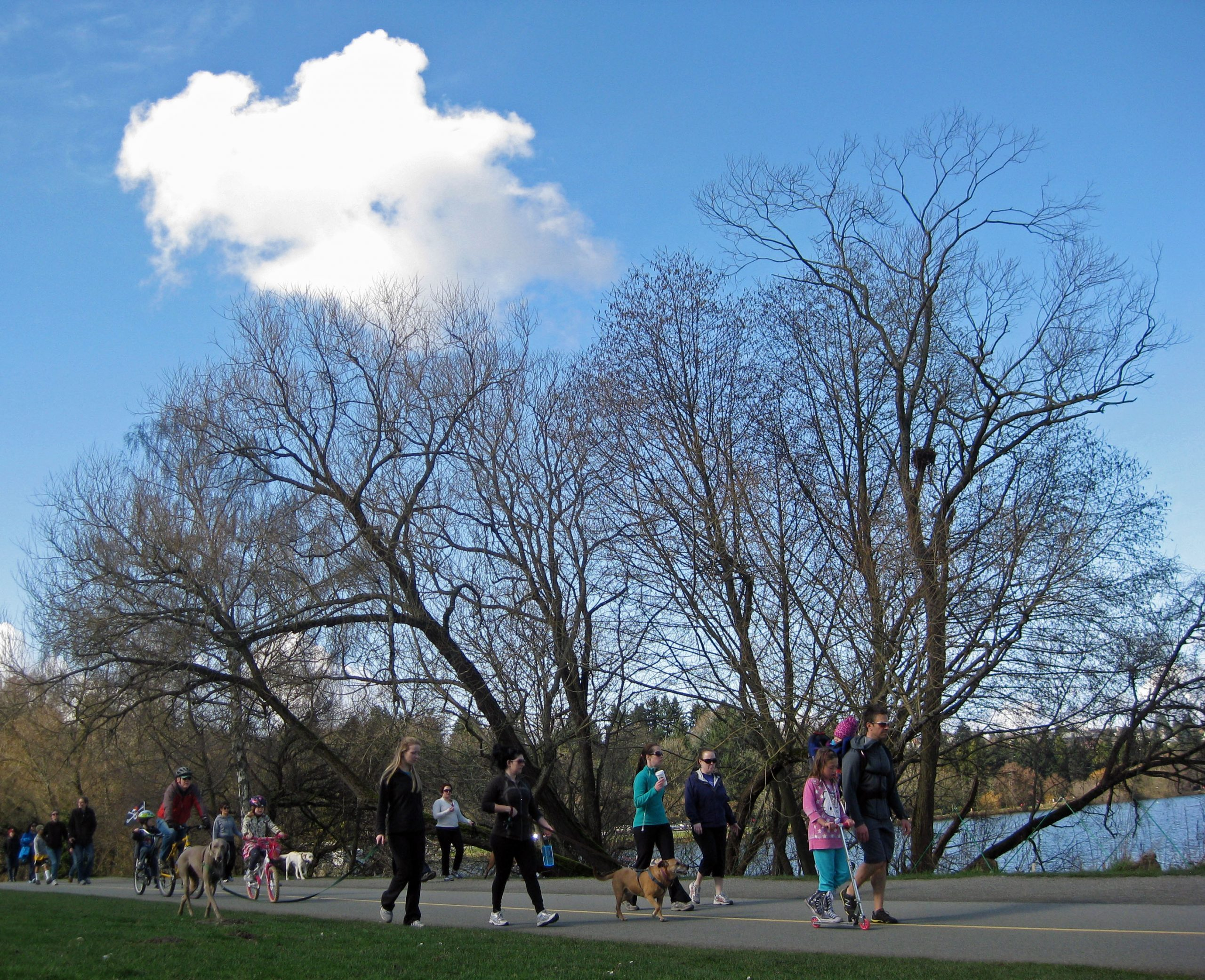 A lone cloud in the crowd at Green Lake. (March 3, 2013)