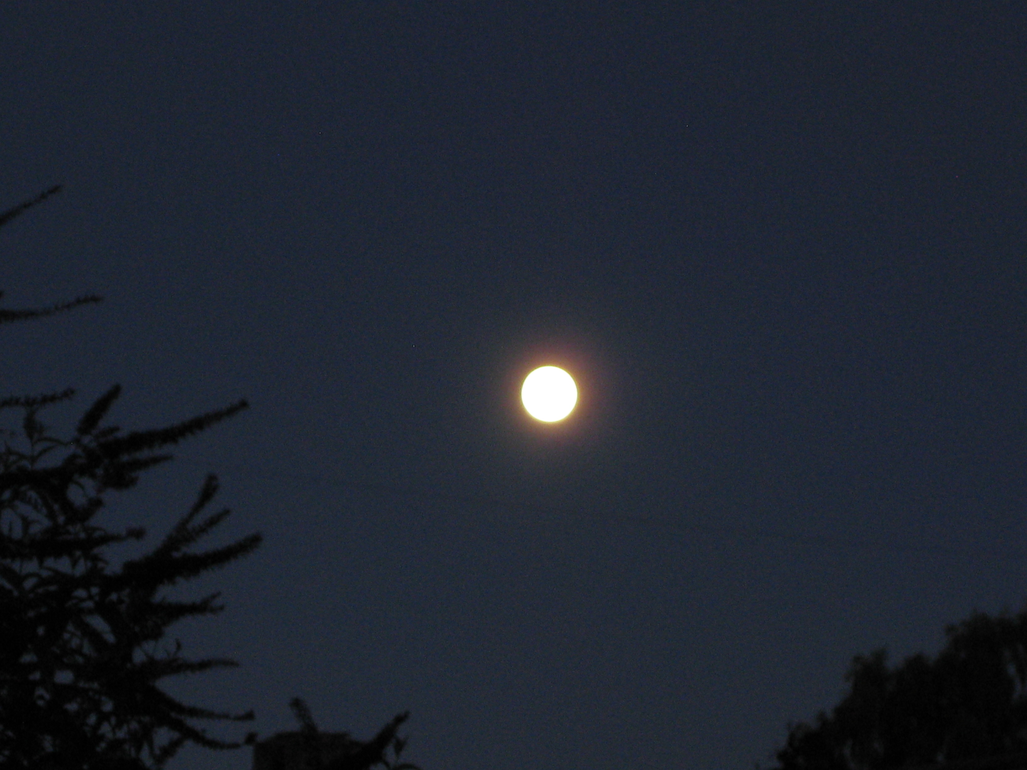 Once in a blue moon, there's a blue moon. I shot this from my backyard, looking up and beyond. <br /><p id=