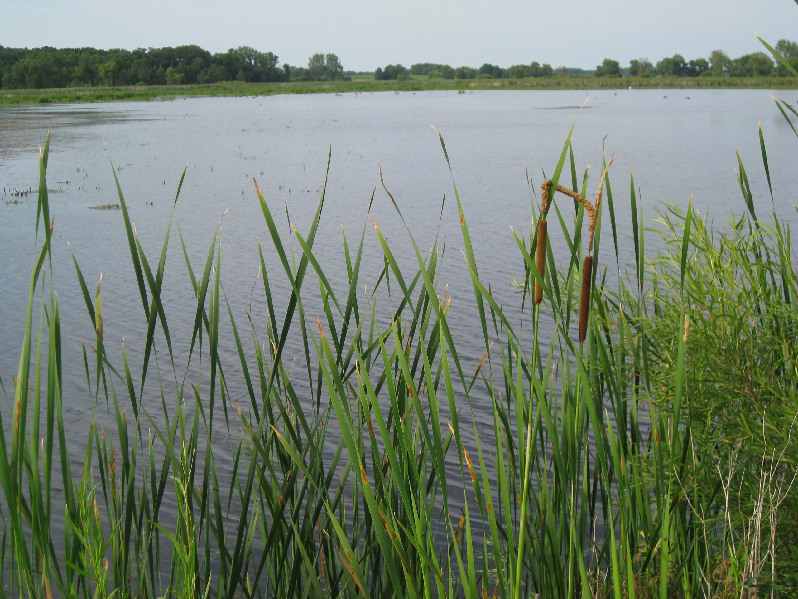 A cherished destination: Horicon Marsh Wildlife Refuge - 30,000-acre sanctuary for migratory birds.